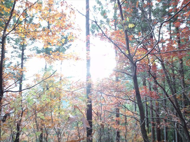 病み上がりの鷹ノ巣山   日帰り登山(2014.11.30)