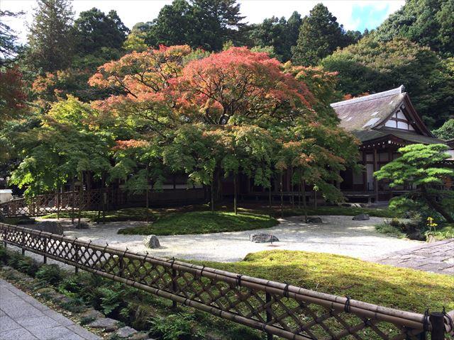 雷山 雷山千如寺の大かえで  日帰り登山(2014.11.3)