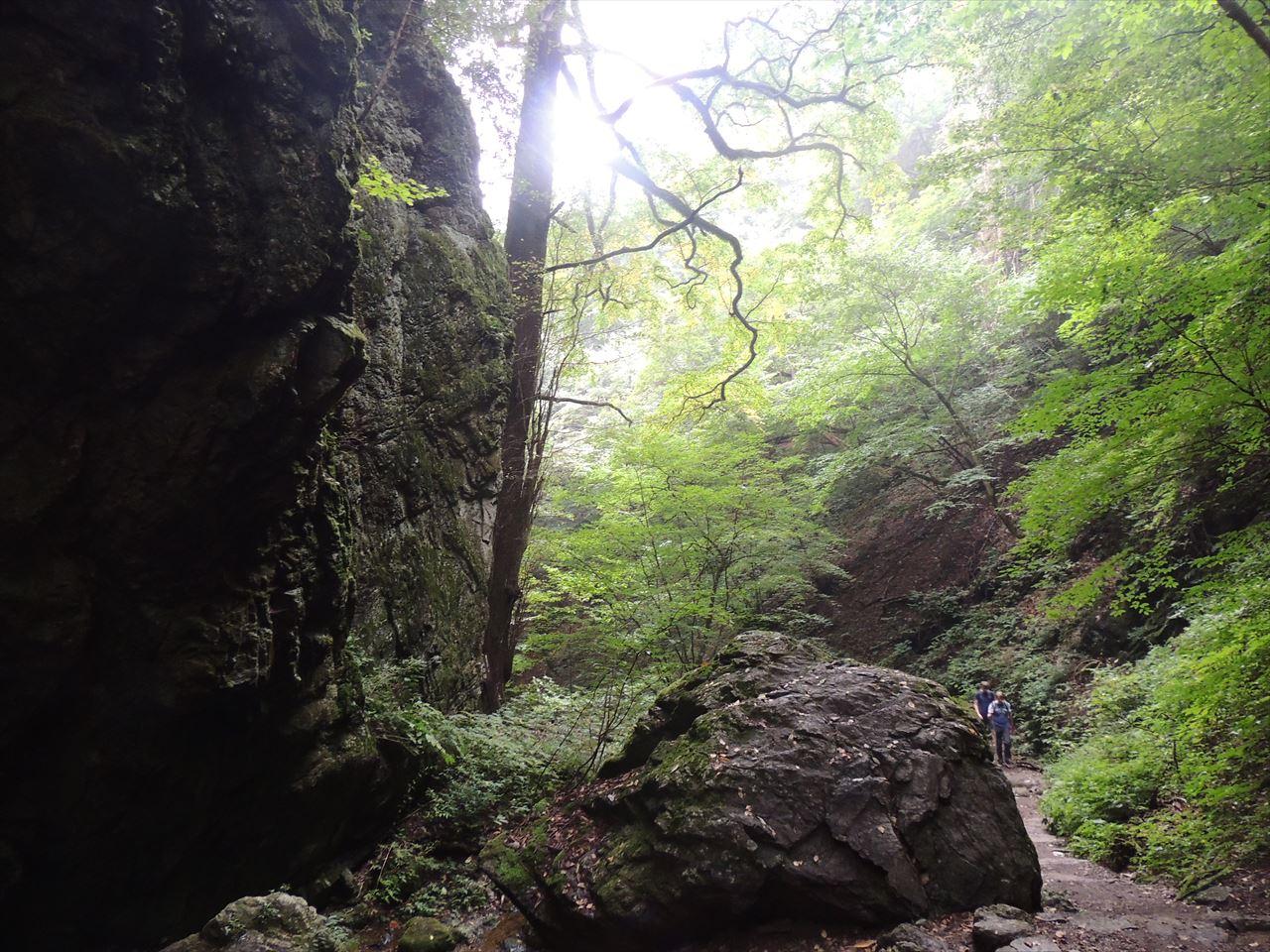 御岳山と日の出山  日帰り登山    苔ロックフェスティバル2015(2015.9.6)
