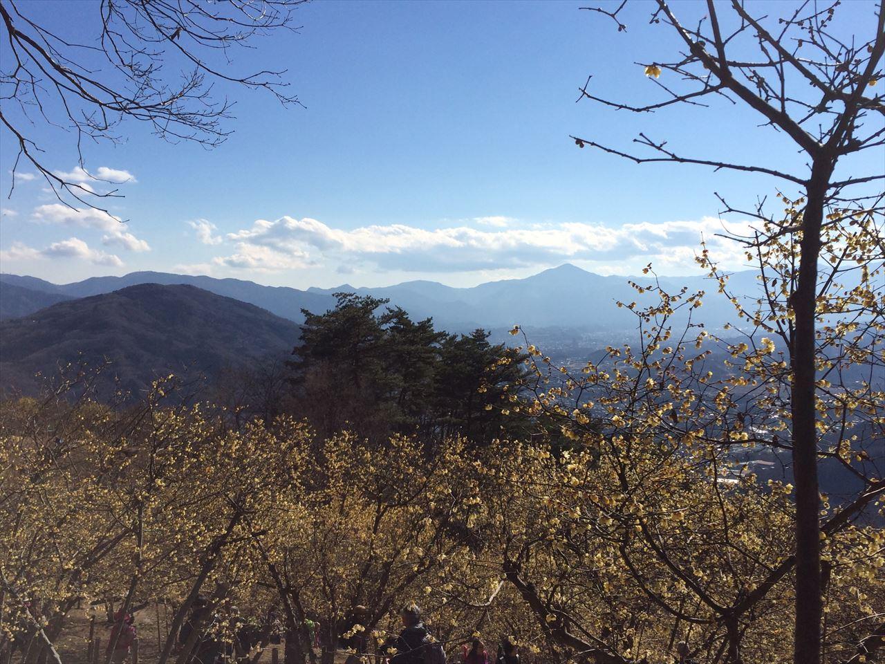 宝登山 花見登山 蝋梅の甘い香りと狼神社(2016.1.16)