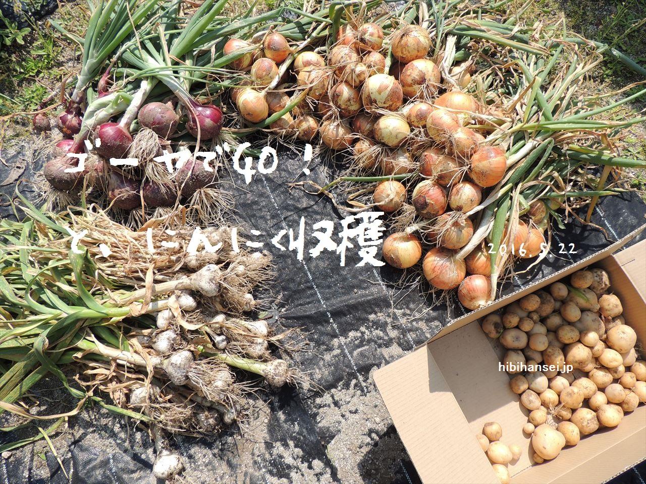 【家庭菜園】ゴーヤでGO!&にんにく収穫(2016.5.20)