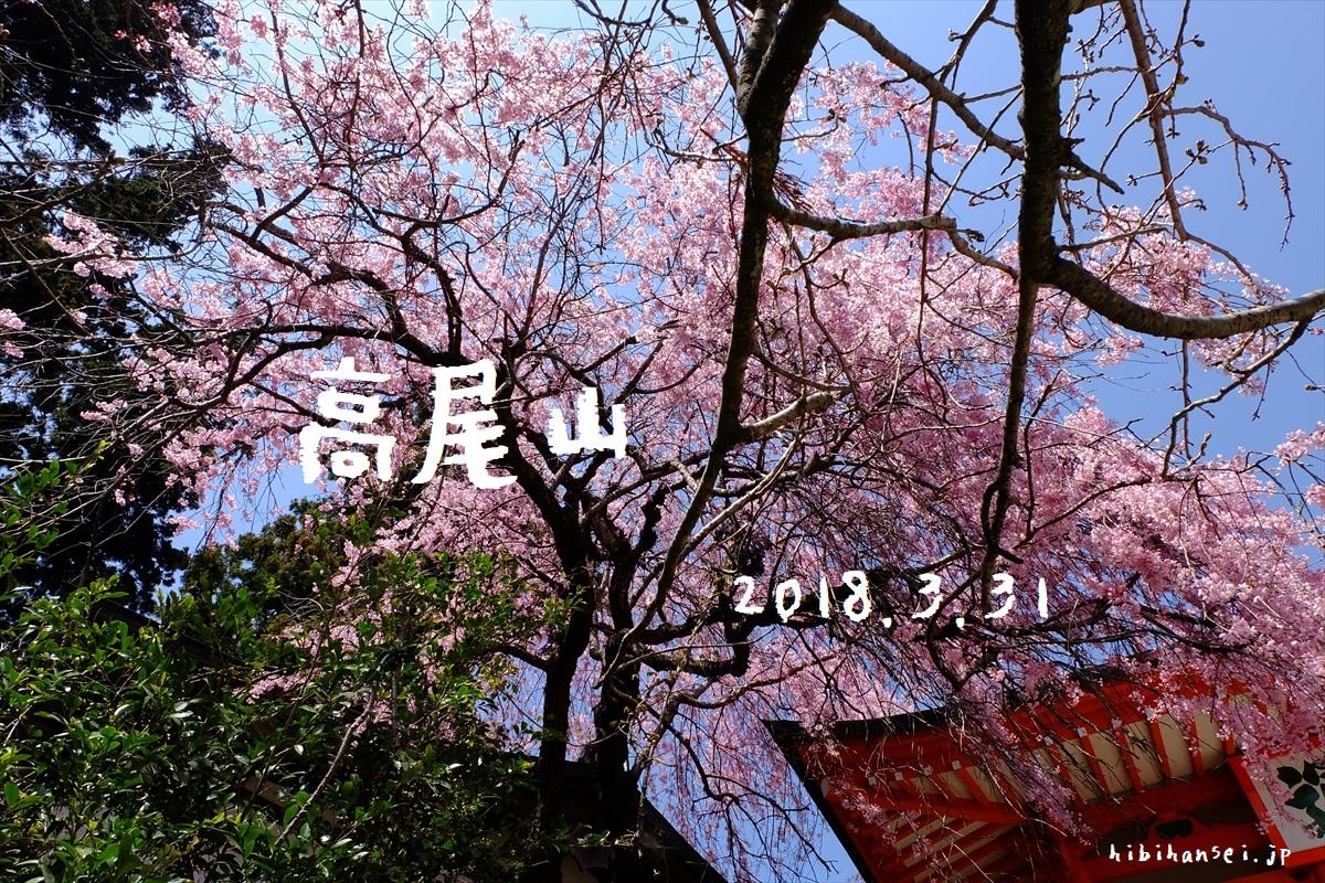 【登山かわら版】高尾山の桜スポットを紹介するぜ! この春お薦めのお花見登山
