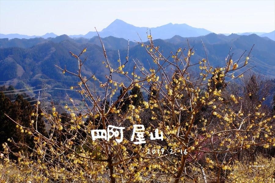四阿屋山 登山 彩の国で蝋梅と福寿草を満喫 春先取りの峰
