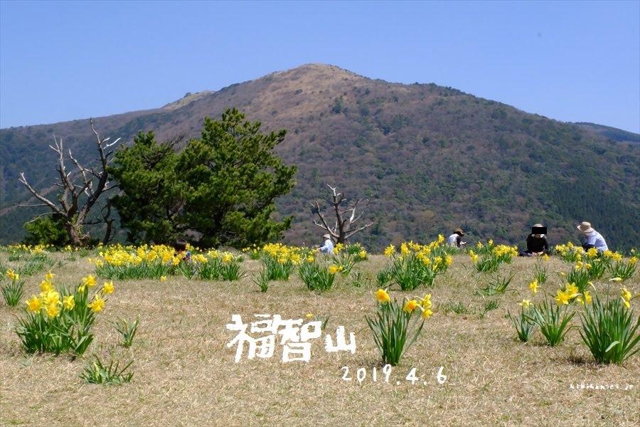 福智山 登山 虎尾桜と源平桜 花の九州を満喫する花三昧の峰