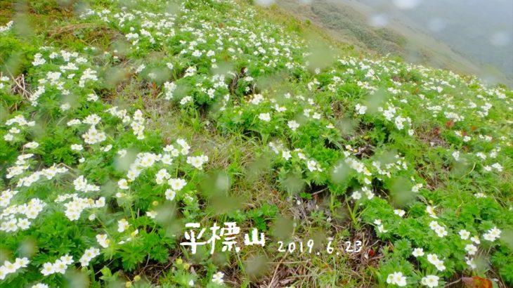 平標山 登山 6月に歩きたい花の山は強風と寒さに震える梅雨の峰