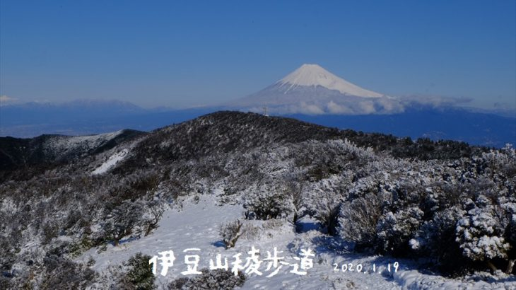 達磨山と金冠山 雪山登山 雪化粧した伊豆山稜歩道は富士山と海の大絶景