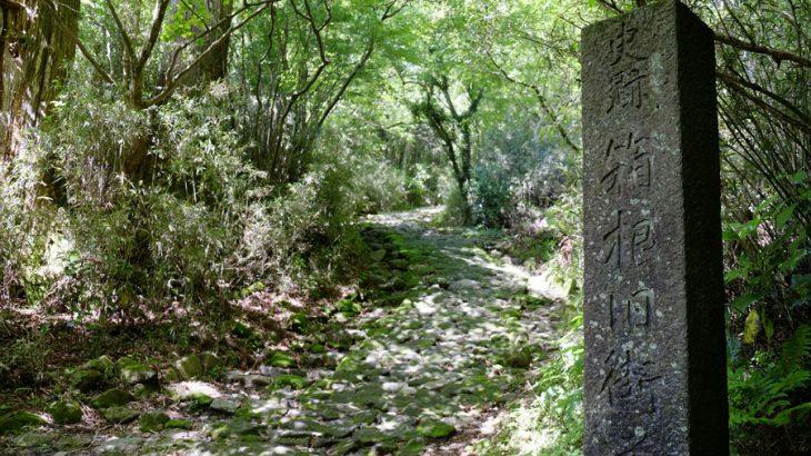 箱根旧街道(東坂) 江戸時代の石畳は新緑のトンネル 甘酒飲んで箱根関所跡から湯本駅までハイキング