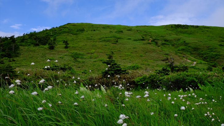 巻機山 登山 風にそよぐワタスゲと広大な稜線 ニコちゃん池塘と花々の峰