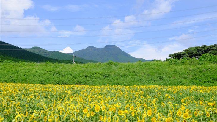 鞍岳とツームシ山 登山 運気を上げろ!無動寺跡で猛暑に燃える満開のキツネ
