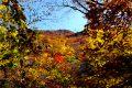 九重黒岳(高塚山) 紅葉登山 くじゅう1の原生林は一切合切輝く光葉の森