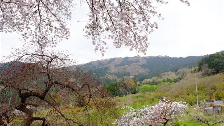釜伏山と登谷山 花見登山 春は秩父でぶっちぎり!花桃の郷とフレスコ画の瞳