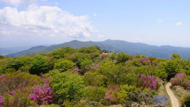 【福岡】井原山 覚悟しいや! コバノミツバツツジ満開のチャラ島は新緑と極彩色の森