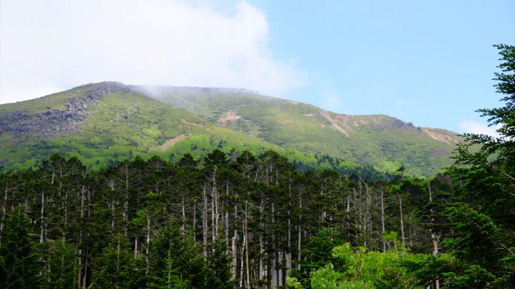 【八ヶ岳】硫黄岳 野菜とろっとろ!オーレン小屋のボルシチとウルップソウはガスっても天国