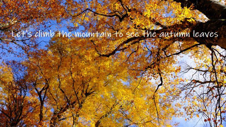 【登山かわら版】紅葉登山ならここへ行け!感動てんこ盛りの秋山を紹介するぜ!